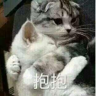 重庆市,cos,日常,本子,求妆娘