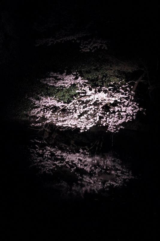 喵记列表 三月里的日本樱花 那些偏门的赏花地点  高松栗林公园.