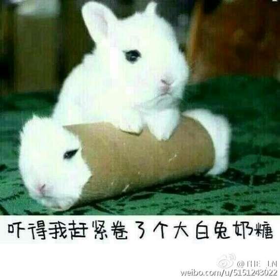 成都市,喵喵喵??,