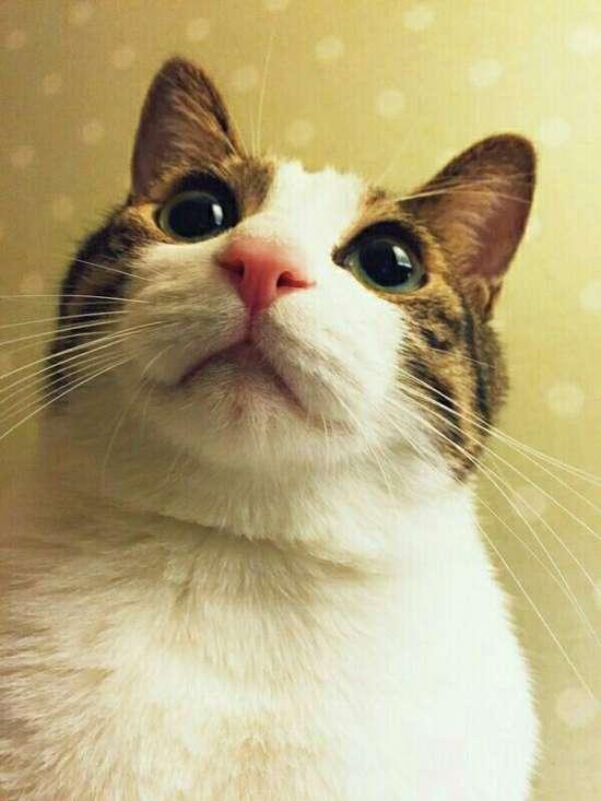 日常,猫粮,猫奴君,