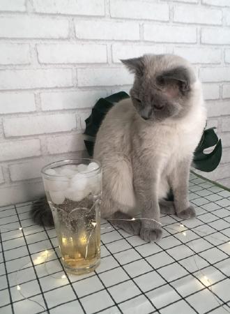 喵喵星球猫咖
