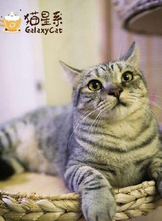 广州·猫星系桌游猫咖