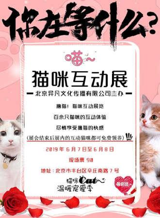 北京猫咪互动展