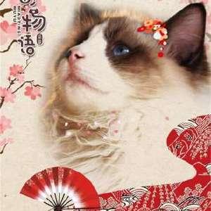 喵町物语-猫咖10-12插图