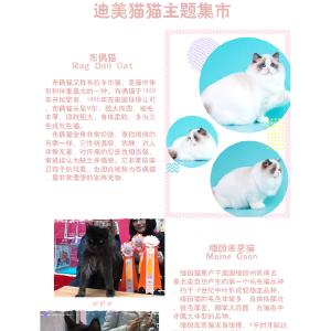 上海daydream吸猫领养集市插图
