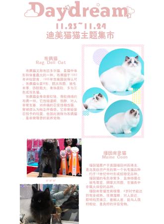 上海daydream吸猫领养集市