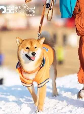 杨柳青庄园门票+宠物滑雪乐园套票