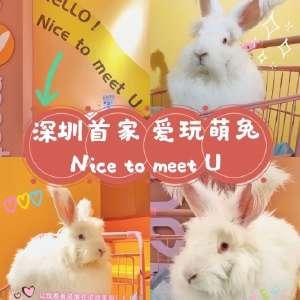 深圳首家愛玩萌兔插圖