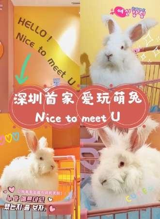深圳首家爱玩萌兔