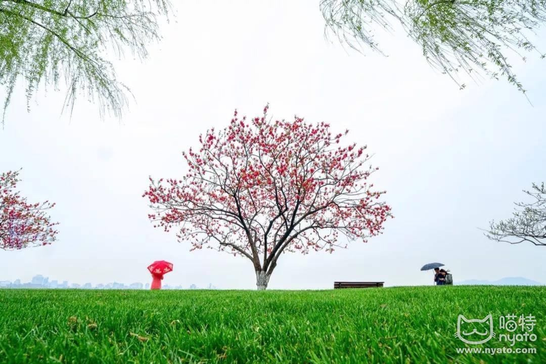 在杭州美到想翘班的季节,国漫君来霸屏了! 漫展 第4张