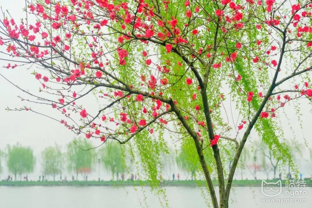 在杭州美到想翘班的季节,国漫君来霸屏了! 漫展 第3张